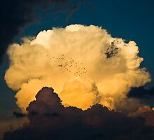 Anvil birds by ChadLarsonPhoto