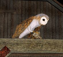 Barn Owl by Walter Colvin