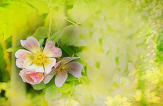 Common wild rose by Irene  Burdell