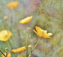 Buttercup Delight by Astrid Ewing Photography
