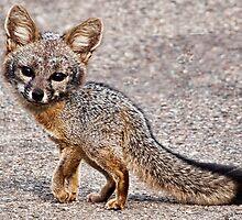 A Foxy Moxy by GolemAura