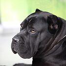 black dog by mrivserg