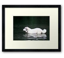 Goliath River Pausing  Framed Print