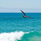 Sea Gull Over The Sea by Kgphotographics