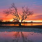 My Tree...Yet Again. Victoria Point Qld Australia by Beth  Wode