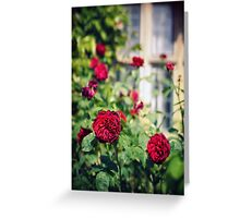 Round and round the garden Greeting Card