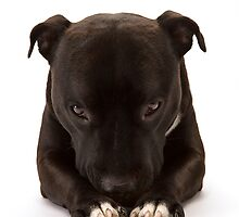 Canine Prayer by Mark Cooper