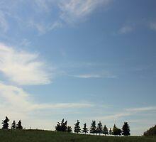Alberta prairie shelterbelt by Jim Sauchyn