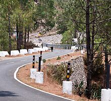 Cow on a mountain road in Lansdowne by ashishagarwal74