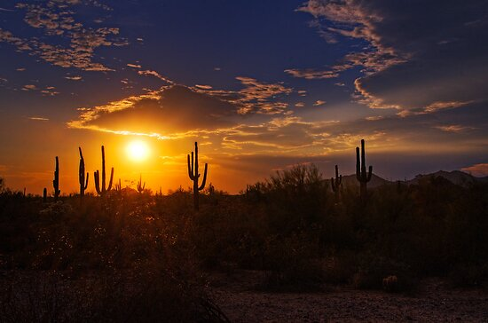 Sonoran Sunset  by Saija  Lehtonen