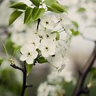 Little White Flowers by KendraJKantor