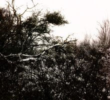 Plants in the snow by Wintermute69