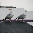The Seagull brothers by Jordon Wicks