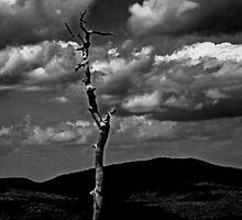 Single Tree by GalleryThree