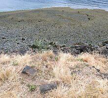 Smith Cove near Pier 91, Seattle, Washington by Julie Van Tosh Photography