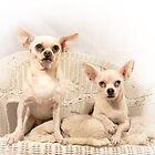 Chihuahua Gothic by Corri Gryting Gutzman