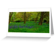 Bluebell Glade Greeting Card