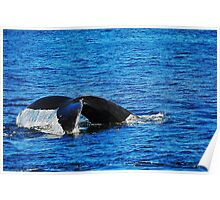 Humpback Whale Diving Poster