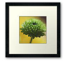 Little green Delight Framed Print