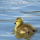 First Swim... by KUJO-Photo