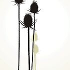 Thistle by gepard