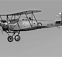 Hawker Tomtit 1930 by DonMc