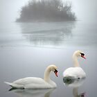 Swan Lake by Roger Maynard