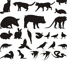 Animal pet by gepard