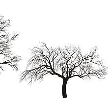 apple, walnut and chestnut  tree by gepard