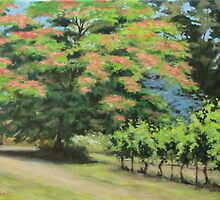 Vineyard Mimosa by Karen Ilari
