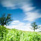 Taken with Lee Big Stopper, Tree next to Southern Upland Way, Near Yair, Scottish Borders by Iain MacLean