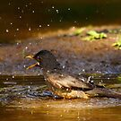 Singing in the shower by Graeme M