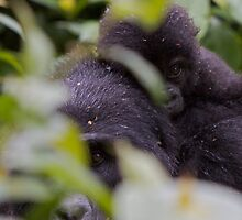 Peeking through the leaves by James Godber