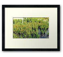 Wild Natural Beauty Framed Print