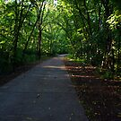 Path through the greenery by agenttomcat