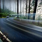 Moving through Time - Black Spur, Victoria, Australia by Sean Farrow
