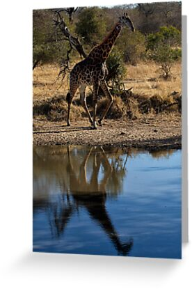 Tall Reflection by Michael  Moss