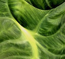 Elephant Ear Abstract by aprilann