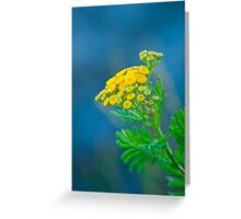 Nature's Abstract 4 Greeting Card