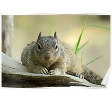 Rock Squirrel ~ Now tell me why your Nuts....... Poster