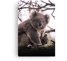 Koala Baby Canvas Print