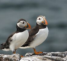 Puffin Duo  by Moonlake