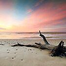 Fallen Tree Beach by Annette Blattman