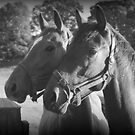 The Girls- Thoroughbred Mares by Lou Wilson