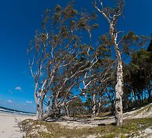 Trees - Coonarr Beach - Bundaberg - Australia by Anthony Wilson