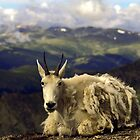 Shaggy Mountain Goat by sally-w