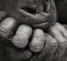 Knuckles by Sheila Smith