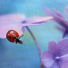 Ladybird on hydrangea by Ellen van Deelen