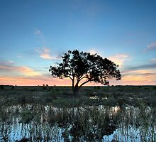 Tranquility VII by Mark Cooper