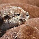 The Otter Huddle .... by jdmphotography